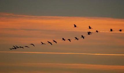 Le Maroc compte 480 espèces entre oiseaux résidents et migrateurs | Biodiversité | Scoop.it