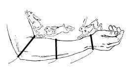 The cutaneous rabbit illusion hops out of the body : Neurophilosophy | The brain and illusions | Scoop.it