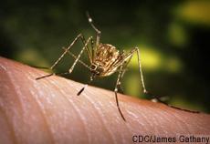 Dengue: MedlinePlus en español | Dengue | Scoop.it