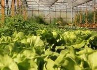 De Keukentuin: biologisch tuincentrum | cape town | Scoop.it
