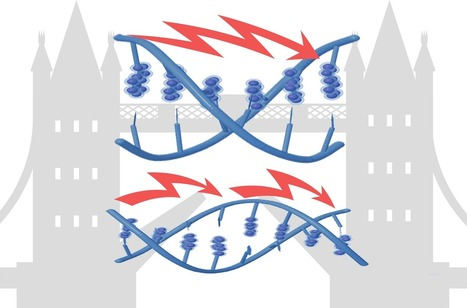 Scientists engineer tunable DNA for electronics applications | Tech Trends and Industry | Scoop.it