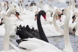 Black Swans at Work   ...» Talented HR   Talented HR   Talented HR   Scoop.it