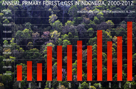 Indonesia lost 8.8m ha (22m acres) of forest in the 2000s, generating 7 billion tons of CO2 | Biodiversity IS Life  – #Conservation #Ecosystems #Wildlife #Rivers #Forests #Environment | Scoop.it