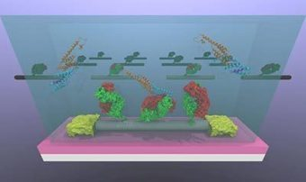 Carbon nanotube transistors designed to detect cancer biomarkers | Amazing Science | Scoop.it