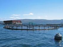 Consumer Clout In Determining The Future Of Farming Atlantic Salmon - PerishableNews (press release) | Nova Scotia Fishing | Scoop.it
