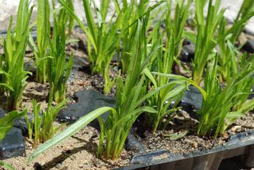 Développez votre jardin grâce à la technique du bouturage | Bricolage et décoration | Scoop.it