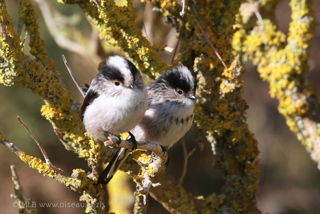 petit affut à Kerambigorn #Fouesnant #oiseau #ornithologie | LA #BRETAGNE, ELLE VOUS CHARME - @Socialfave @TheMisterFavor @TOOLS_BOX_DEV @TOOLS_BOX_EUR @P_TREBAUL @DNAMktg @DNADatas @BRETAGNE_CHARME @TOOLS_BOX_IND @TOOLS_BOX_ITA @TOOLS_BOX_UK @TOOLS_BOX_ESP @TOOLS_BOX_GER @TOOLS_BOX_DEV @TOOLS_BOX_BRA | Scoop.it