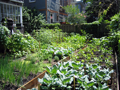 Urban Farming Explodes Across U.S.  | FriendsEAT.com | Healthy Recipes and Tips for Healthy Living | Scoop.it
