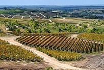 Uruguay: Un pequeño país con mucho tanino! | Autour du vin | Scoop.it