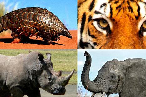 La criminalité liée aux espèces sauvages encourage les conflits, selon un rapport de l'ONUDC | Planete DDurable | Scoop.it