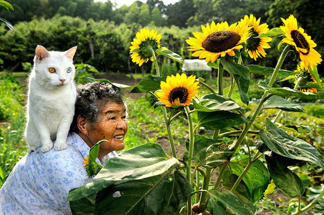 The Daily Life of a Grandma and Her Odd-Eyed Cat | Art in the age of the internet | Scoop.it