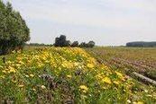 'Bijen-actie Syngenta ongeloofwaardig' | Bodem en Water | Scoop.it