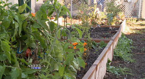Start a garden with food stamps | Local Food Systems | Scoop.it