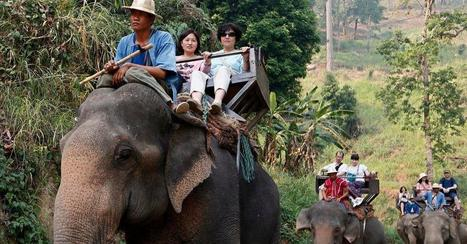 TripAdvisor to Stop Selling Tickets to Many Animal Attractions | Social Loyal Travel Tourism Revolution! | Scoop.it
