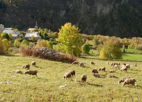 Festival : le Haut-Champsaur célèbre les bergers et les alpages pendant une semaine | Orcières Merlette | Scoop.it