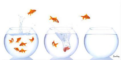 Dans quel bocal êtes-vous ? La sélection naturelle des réseaux sociaux | InPeople | Scoop.it