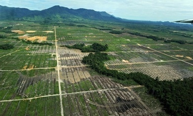 Tropical forests illegally destroyed for commercial agriculture | Medios Sociales: evolución cronológica en las elecciones americanas 2012 | Scoop.it
