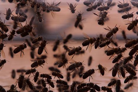 Webcast: The Insect Zoo in Your Schoolyard | School Gardening Resources | Scoop.it