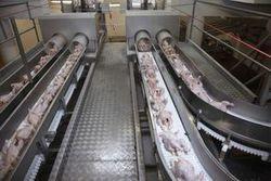 L'entreprise d'abattage de volailles Tilly-Sabco va réduire sa production de 40 % - L'Usine Nouvelle   Entreprises du Finistère Nord   Scoop.it