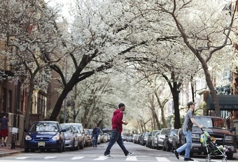 The High Cost of Losing Urban Trees | green streets | Scoop.it