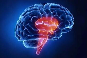 Scientists Discover New Sleep Node in the Brain | Social Neuroscience Advances | Scoop.it