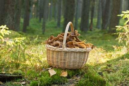 Frutta e Verdura di Stagione: la Spesa di Ottobre | Alimentazione Naturale Vegetariana | Scoop.it