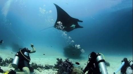 Vidéo plongée Full HD | Les récifs vierges des Raja Ampat ! | Plongeurs.TV | Scoop.it