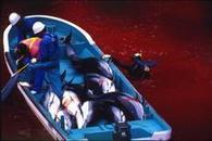 """The Cove Redecorated: """"Living Together With Dolphins"""" 