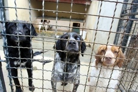 Le nombre d'abandons d'animaux en hausse en juillet | Chronique d'un pays où il ne se passe rien... ou presque ! | Scoop.it