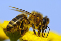 Bee-killing pesticide companies are pretending to save bees | Sustainable Food | Scoop.it
