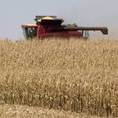 Report: Climate change could devastate agriculture | Sustain Our Earth | Scoop.it