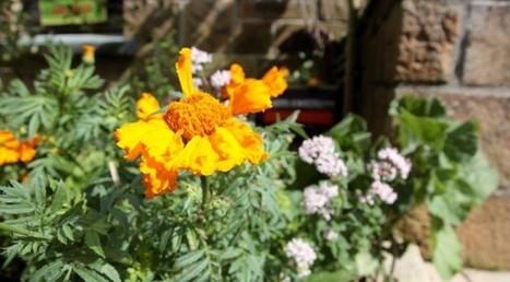 Pourquoi créer des micros jardins urbains | Maraichage-Horticulture | Scoop.it