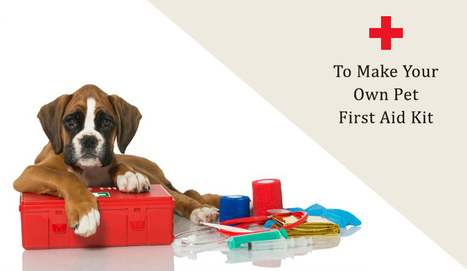 Easy Guide – To Make Your Own Pet First Aid Kit | Pet Supplies | Scoop.it