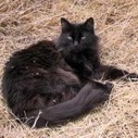Most Friendly Cat Breeds | Cat Care And Fun | Scoop.it