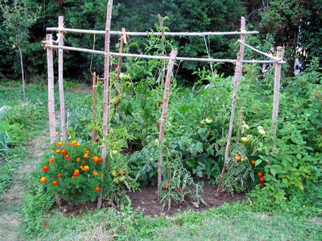 Les bonnes associations de plantes au jardin ! - Blog Alsagarden - Plantes Rares, Jardins Naturels & Actualités | pour mon jardin | Scoop.it
