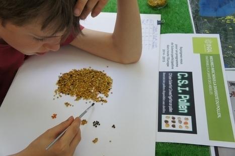 INRA - Projet de recherche participative sur la diversité des pollens en Europe | Abeilles, intoxications et informations | Scoop.it