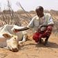 Les assurances ne sont pas une garantie de résilience pour les agriculteurs | Questions de développement ... | Scoop.it
