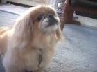 Podee is Dog Aggressive   naturaleza   Scoop.it