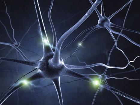 Así se comunican las neuronas | Tecnología | Scoop.it