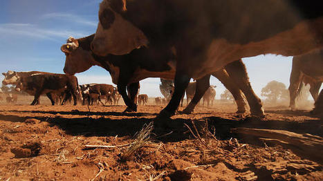 Climate change a massive threat to food security, agriculture | Food issues | Scoop.it