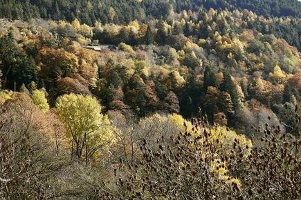 Bruxelles se mobilise pour une gestion durable des forêts de l'Union européenne | The Blog's Revue by OlivierSC | Scoop.it