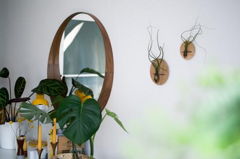 Etairnity: Airplant Homes + Giveaway · Happy Interior Blog | Interior Design & Decoration | Scoop.it