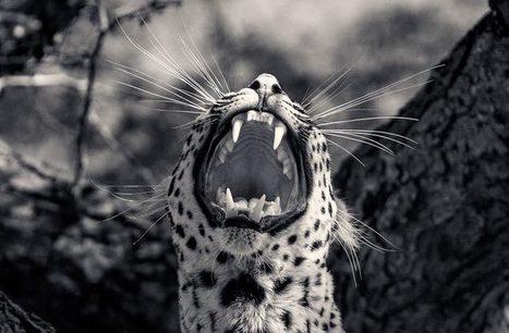 Creatures – Les superbes photographies animalières d'Antti Viitala | Instantanés | Scoop.it