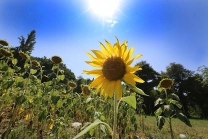 Agriculture : les nouvelles règles européennes ne font pas l'unanimité | Economie de Montagne | Scoop.it