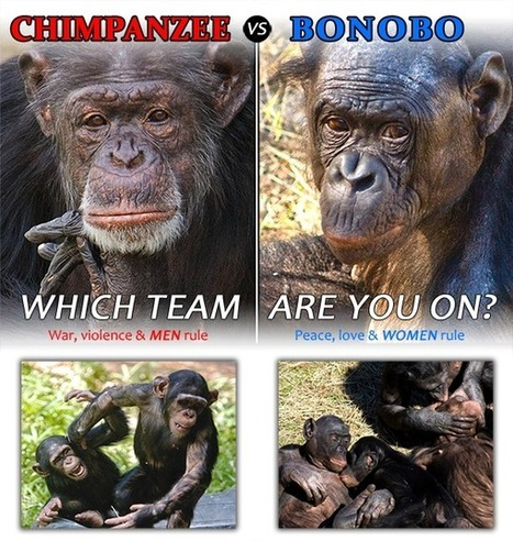 Chimpanzee vs Bonobo - Which team are you on?,