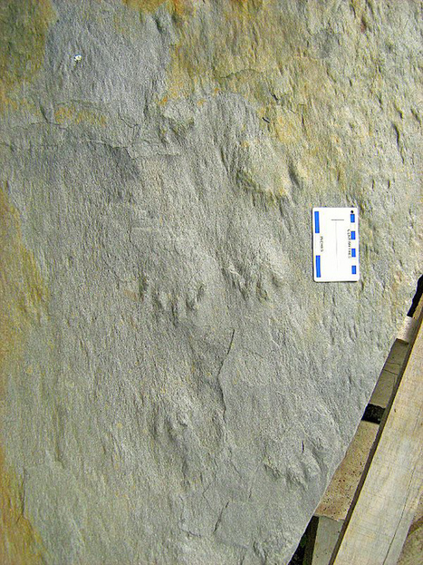 Geologist excited about what can be discovered from fossil find   Geology   Scoop.it
