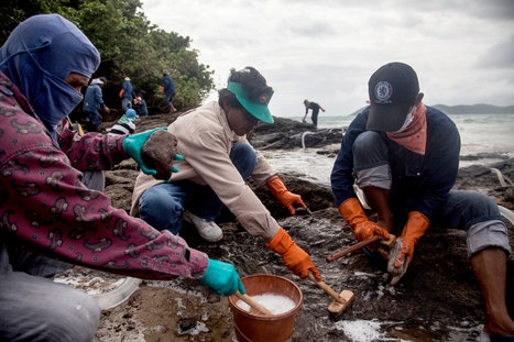 Thai Officials Play Down Effects of Oil Spill | Final Project | Scoop.it