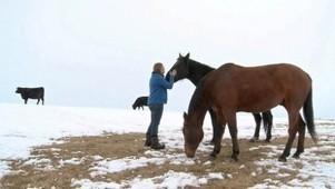 Les aventuriers d'Explô - Destination WWOOFing : Alberta, chez un buffalo ranger | Les liens de Hyacinthe | Scoop.it