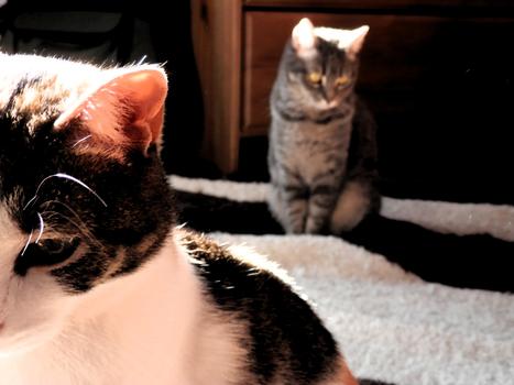The Cat's were in the world! | La Lechuga esta Pocha | Scoop.it
