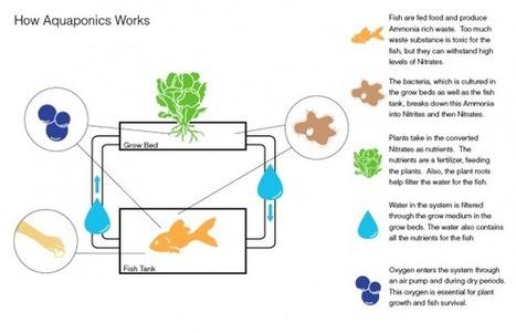 Aquaponic System | Aquaponic Food Production | Naturally Earth ... | Wellington Aquaponics | Scoop.it